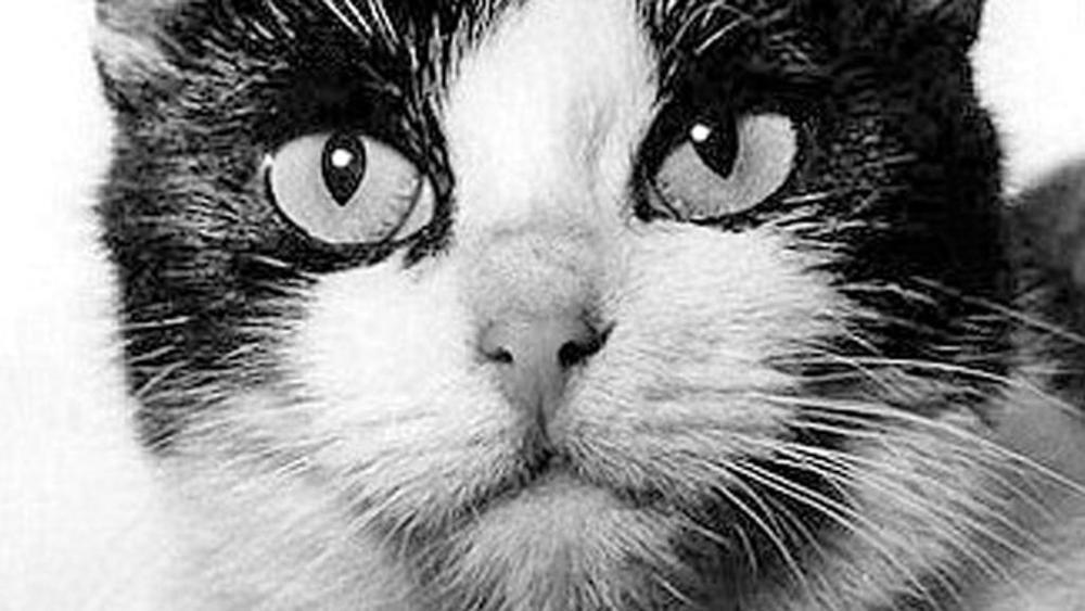 Félicette, la prima gatta mandata nello spazio